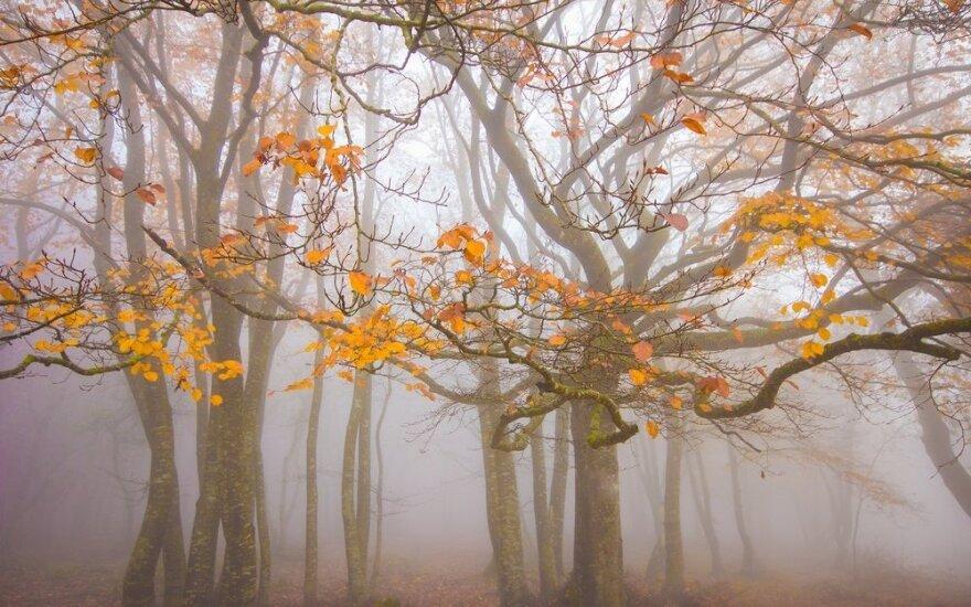 Kokie ženklai rodo, kad jums - rudeninė depresija