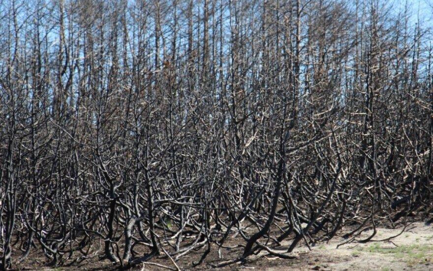 Šiemet jau kilo 69 miško gaisrai