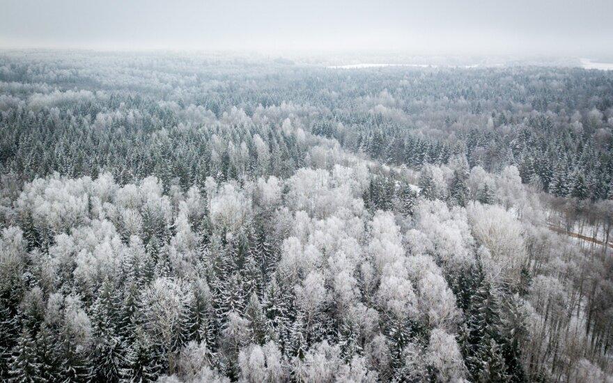 Paaiškėjo, kas vadovaus Valstybinių miškų urėdijai