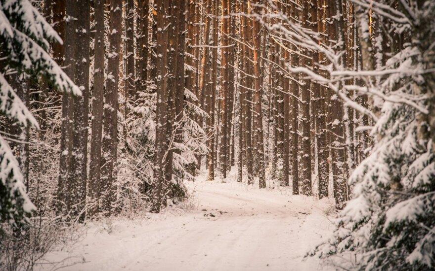 Iš miško vagia medieną: miškininkai paskelbė apie reidus