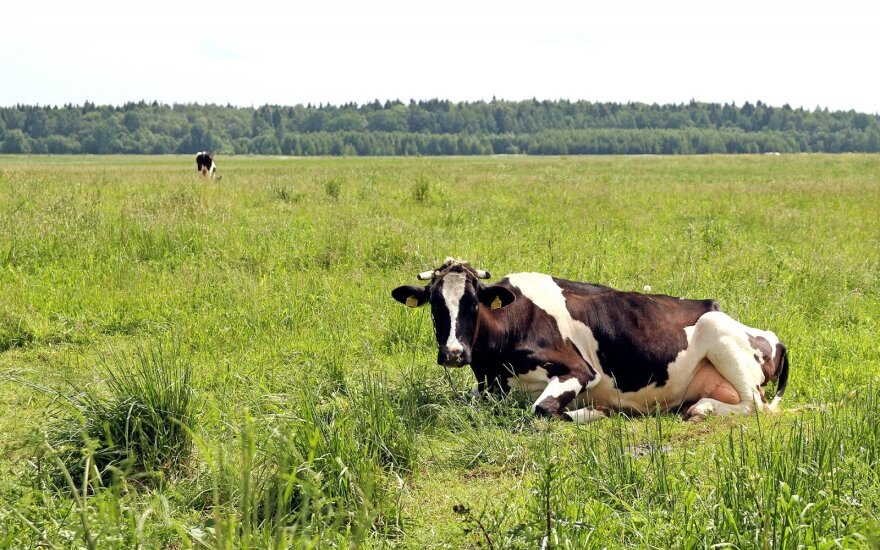 Lithuanian government to give €18m to dairy farmers