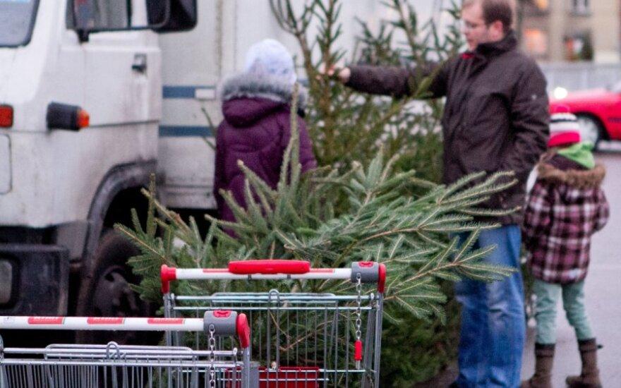 Kalėdų eglutės: brangiausios jau išgraibstytos