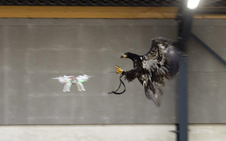 Erelis kovoja su dronu