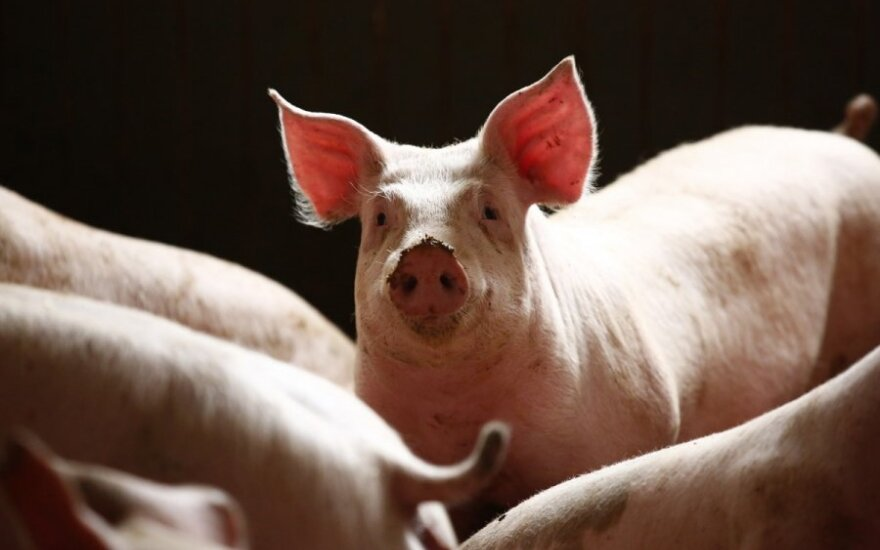 African swine fever reported in Danish-owned pig farm in Lithuania