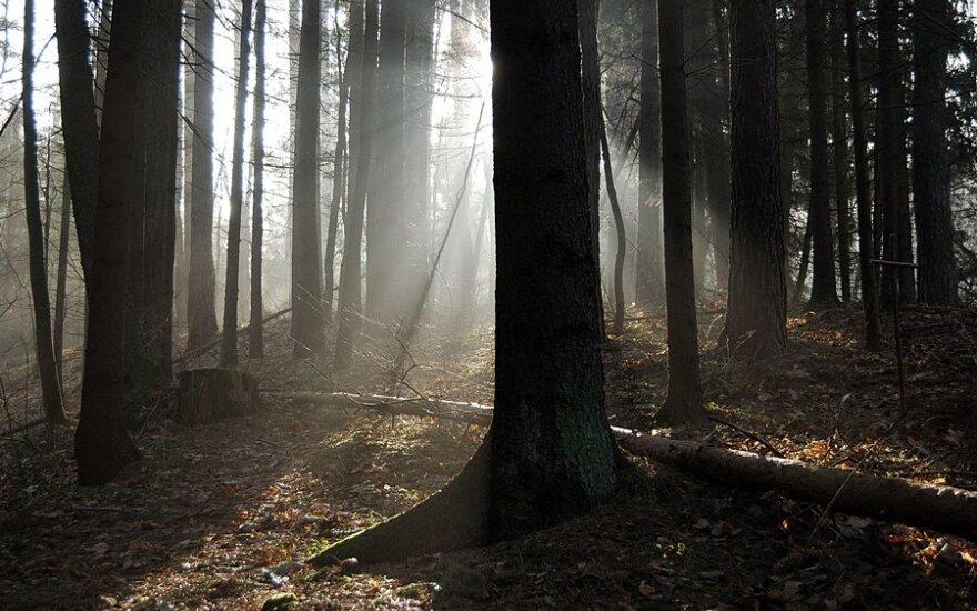 Kalifornijoje rastas savaitę miške klaidžioję 73 metų vyras