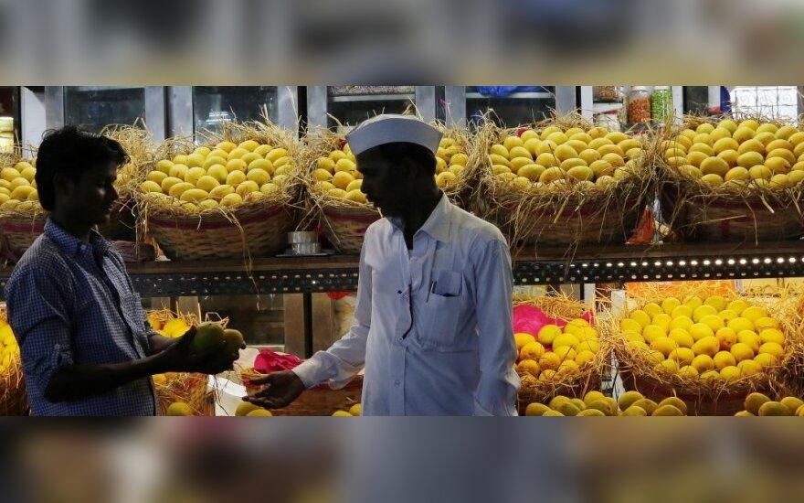 Alphonso mango vaisiai