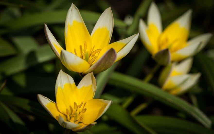 Astrologės Lolitos prognozė gegužės 9 d.: stiprių energijų diena