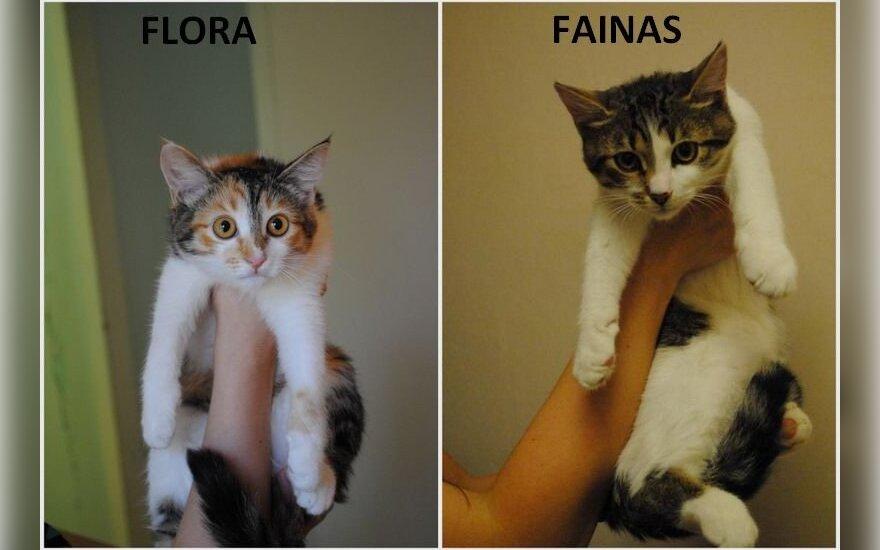 Flora ir Fainas