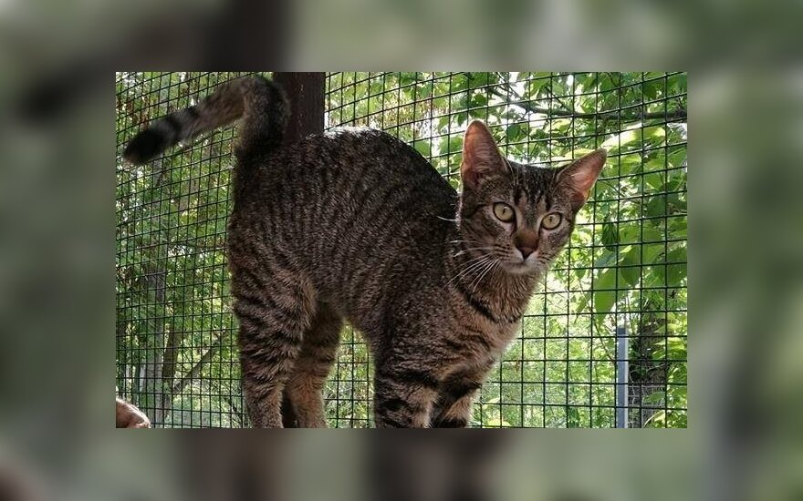 Egzotiškos išvaizdos katei Parku ieškomos namų džiunglės