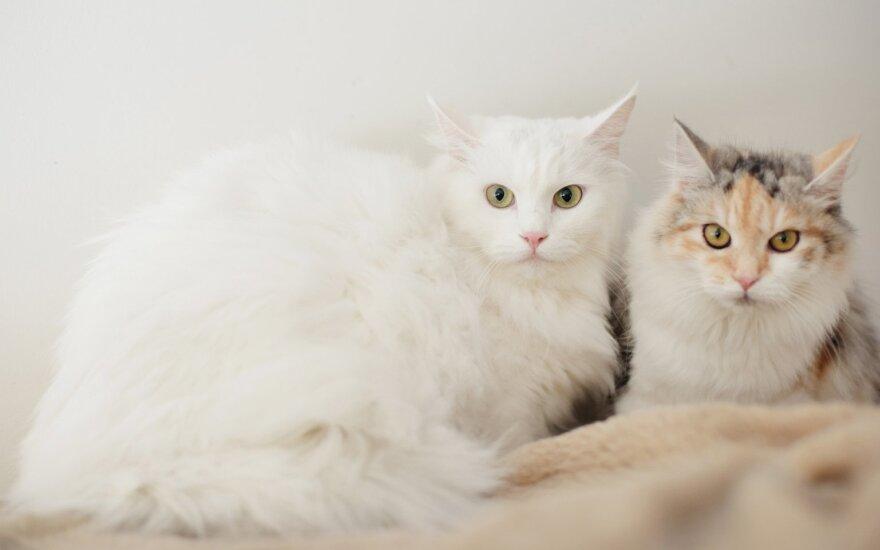 Namų ieškančios katės