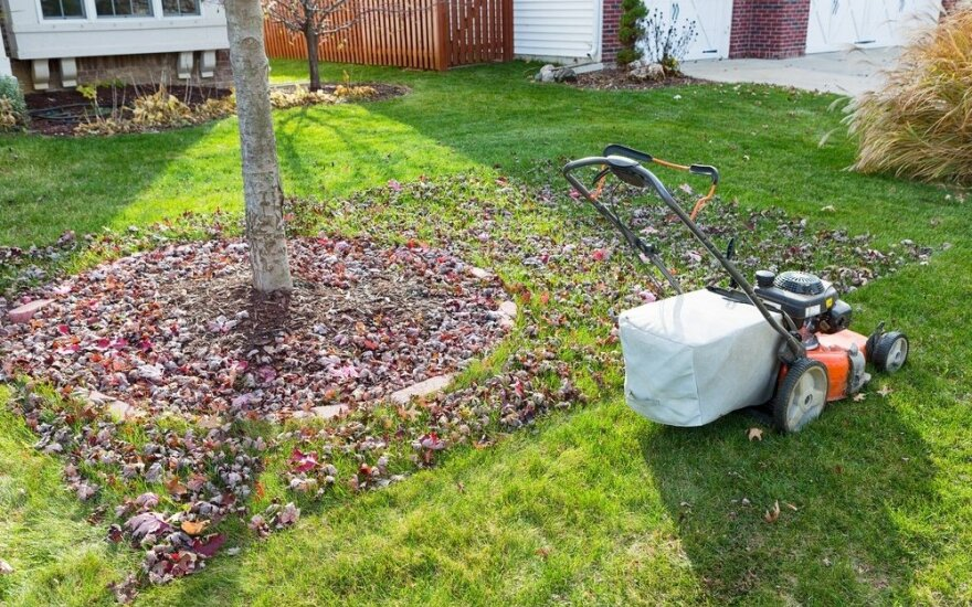 Kokie sodo ir daržo darbai dar liko: pataria specialistai