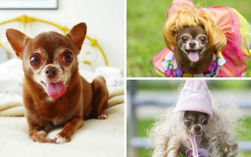 Beveik 100 tūkst. sekėjų turinti šunytė griauna mitus apie vyresnius šunis