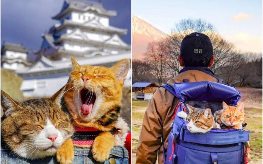 Keliaujančios katės