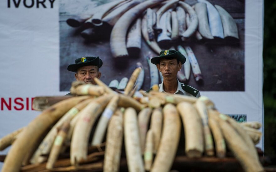 Singapūras uždraus prekybą dramblio kaulu