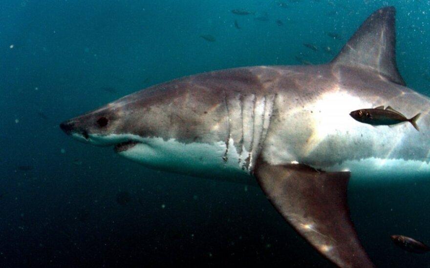 Bahamose rykliai mirtinai sudraskė jauną amerikietę