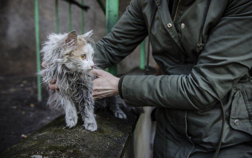 Kai išdavystė pradeda naikinti gyvūną: Luknės istorija