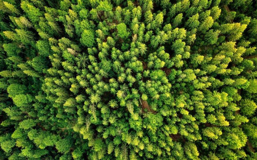 Pivoriūnas: įvykdyta dalinė privačių miško valdų nacionalizacija