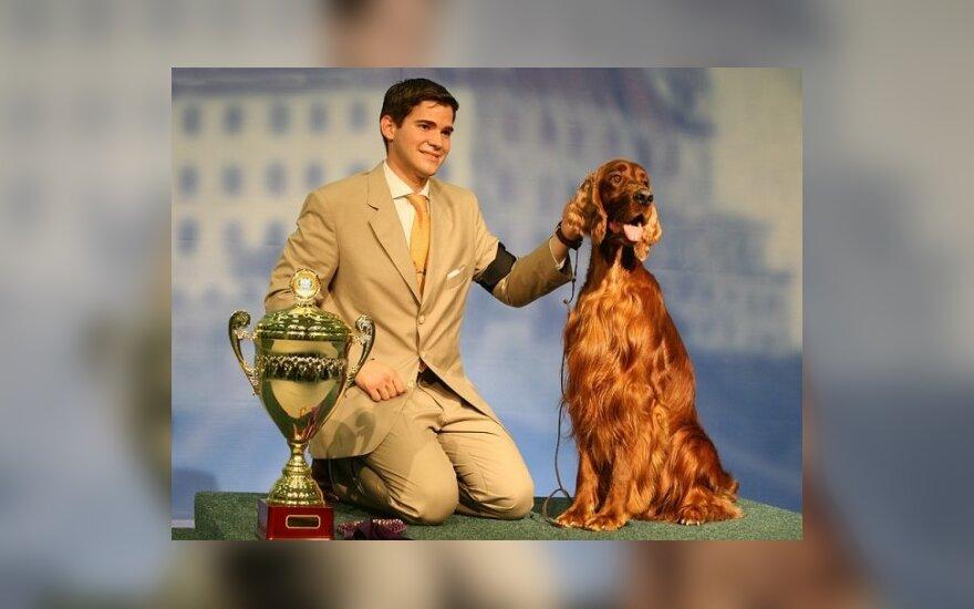 Tarptautinė šunų paroda Bratislavoje: airių seteris Karmino Made Fanfan La Tulipe