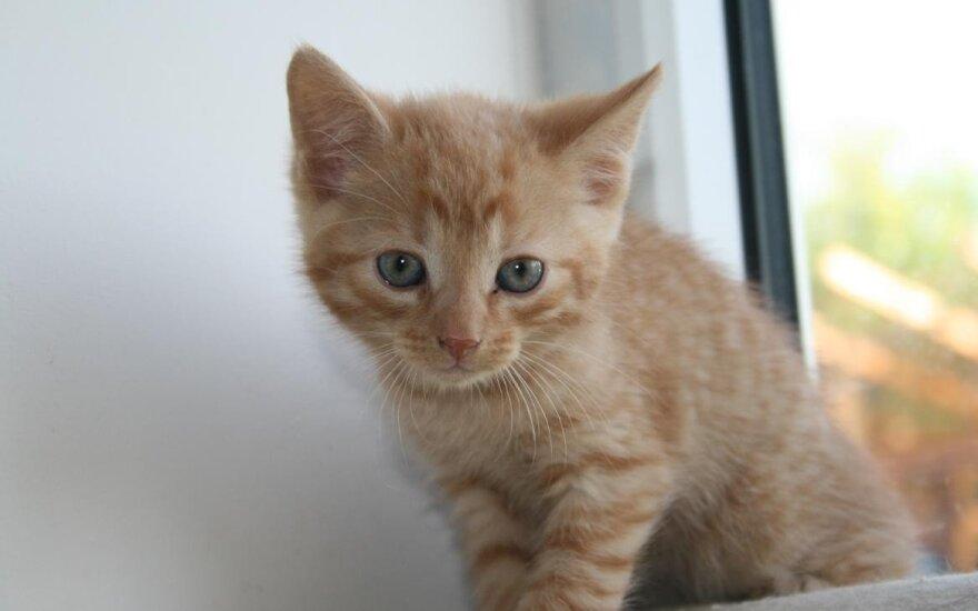Katinukas Smailikas ieško namų