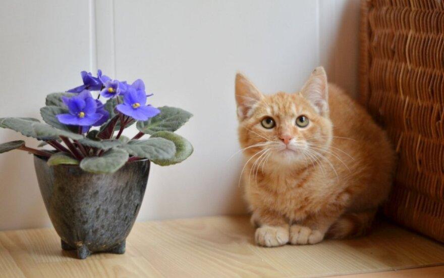 Kačiukas Coliukas laukia naujo gyvenimo pradžios!