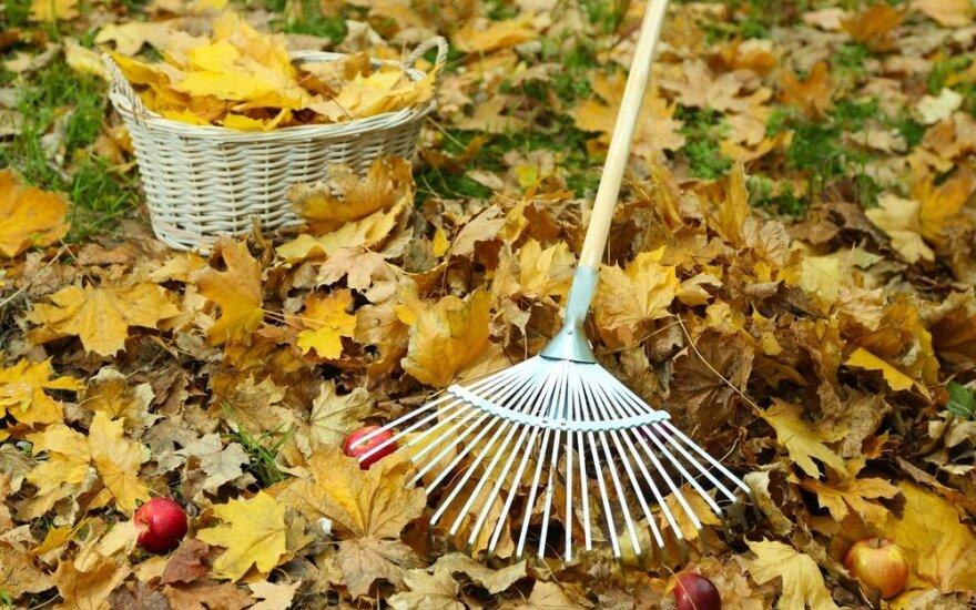 Kaip tvarkyti krentančius lapus: klaidos, kurios gali brangiai kainuoti