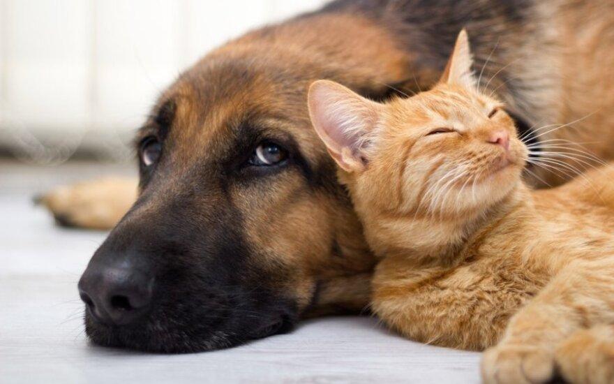 Patarė, kaip išsirinkti naminį gyvūną