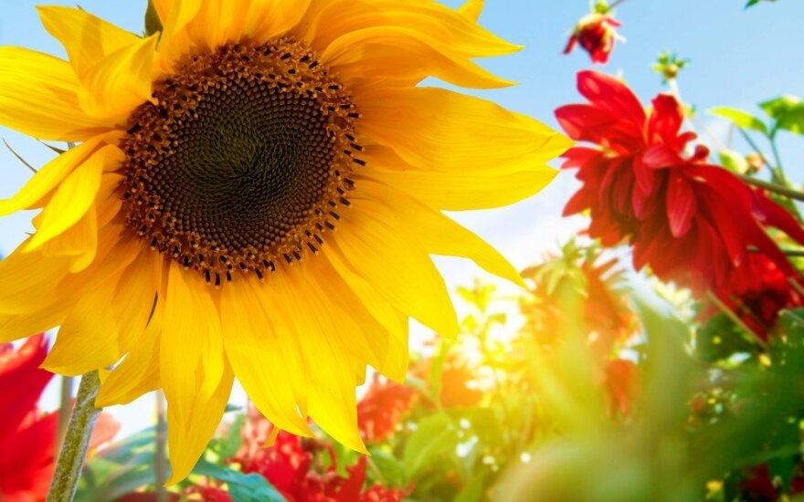 Astrologės Lolitos prognozė spalio 19 d.: gerovės kūrimo diena
