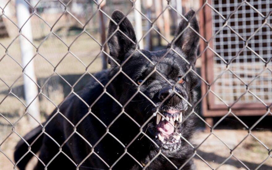 Lietuvos paštas dalys gyventojams lipdukus, įspėjančius paštininkus apie palaidus šunis