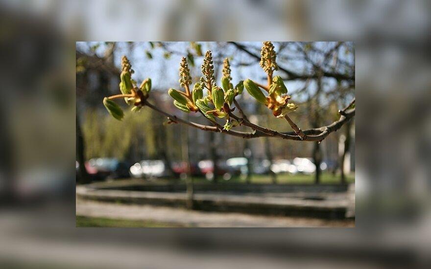 Tas sunkus metas – pavasaris