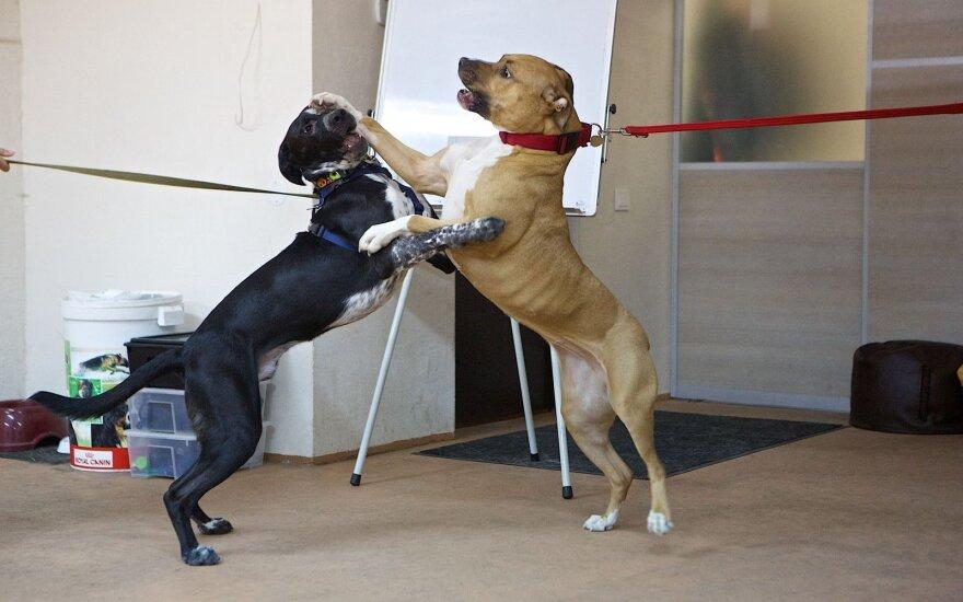 Šunų susitikimas