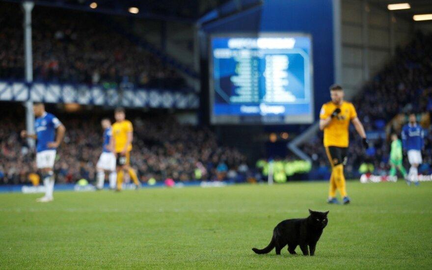 Rungtynes Liverpulyje sutrikdė katė