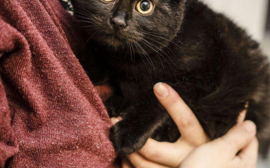 Juoda katytė Tulija, išgelbėta nuo žiemos šaltuko, ieško namų!