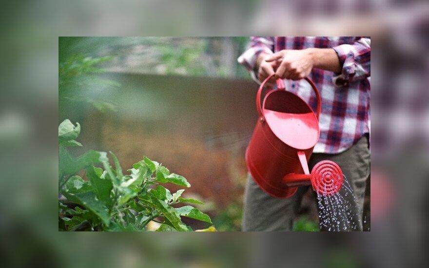 Lietuvoje populiarėja gamtinė žemdirbystė, kai nereikia nei arti, nei kasti