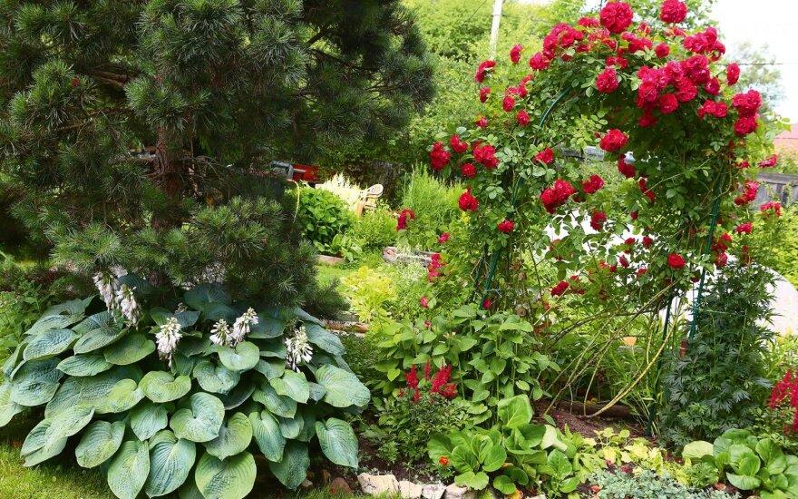 Lapkritis gėlyne – su kokiais augalais dar reikėtų padirbėti