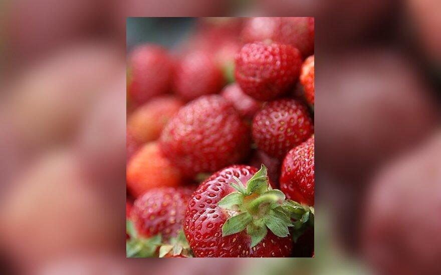 Daugelis Lenkijos augintojų planuoja atsisakyti braškių auginimo