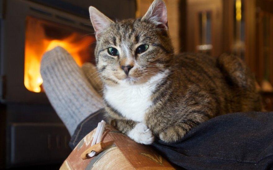 Katė padėjo moteriai pasveikti