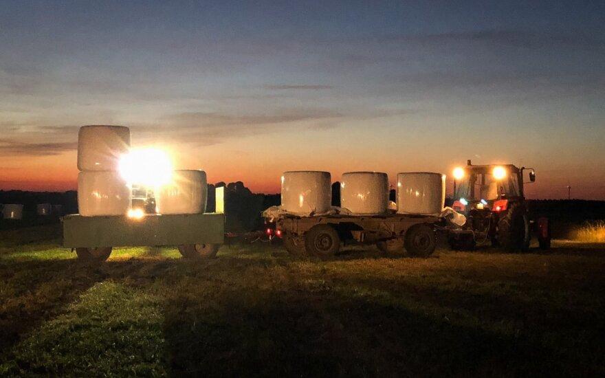 Ūkininkai išvažiavo į pievas – ar karvės turės ką ėsti žiemą?