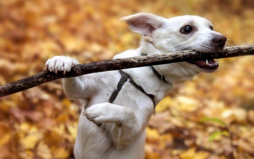 Maiše rastas šunelis tapo namų pažiba