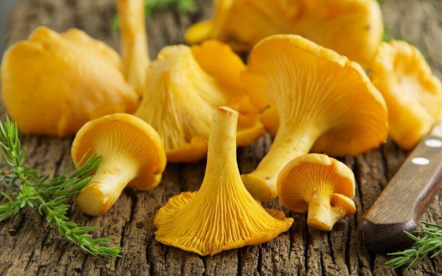 Valgykite į sveikatą: grybų maistinė sudėtis prilygsta vaisiams