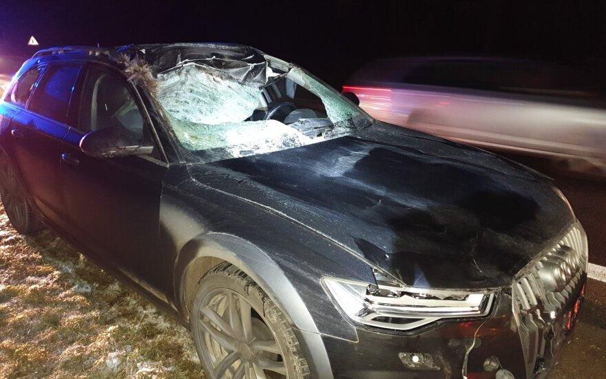 """Į kelią išbėgusį briedį partrenkė """"Audi"""": gyvūnas negyvas, automobilis suniokotas"""