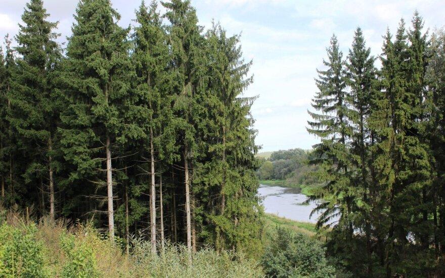 Siūlo atsisakyti apyvartinio pobūdžio mokesčio miškų valdytojams