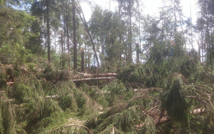 Įspėjimas lankytojams: Žemaitijos nacionalinį parką nuniokojo audra, laikinai uždarytas takas