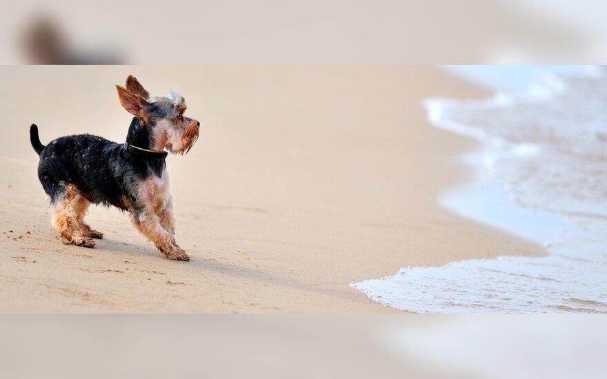 Šuns šeimininkas nori prie jūros ilsėtis su augintiniu: man labai apmaudu