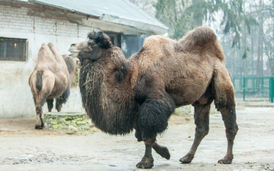 Iš Kauno zoologijos sodo retos rūšys keliauja į gamtą