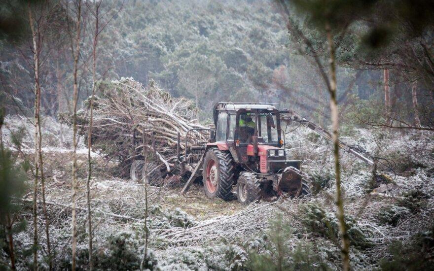 Nausėda siūlo būdą išsaugoti Lietuvos miškus