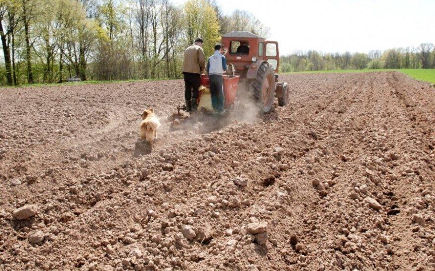 Skelbia sezoninių darbų pradžią – laukiami nepraradę noro dirbti