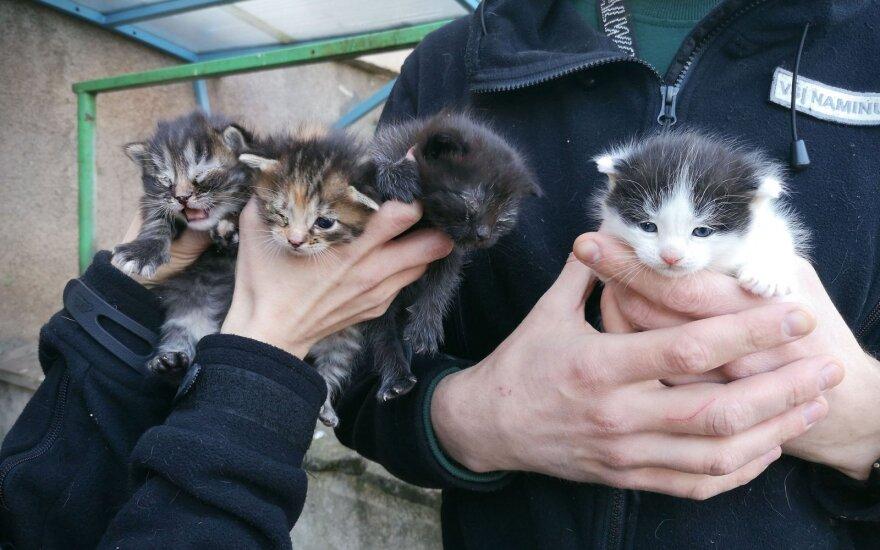Skambina pavojaus varpais: po daugiabučių balkonais masiškai gimsta naujos kačiukų vados