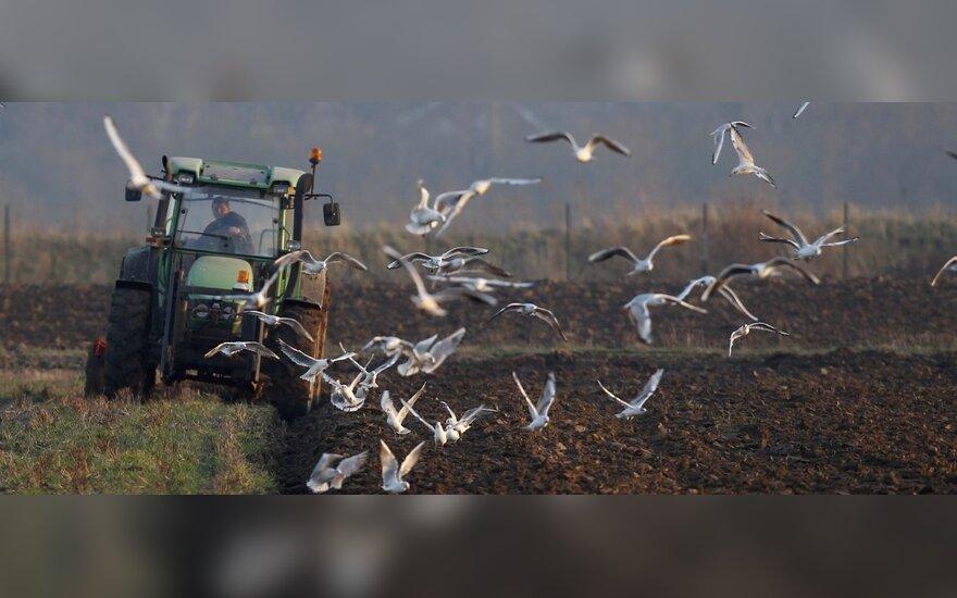 Naujas TV projektas ieško vienišų ūkininkų