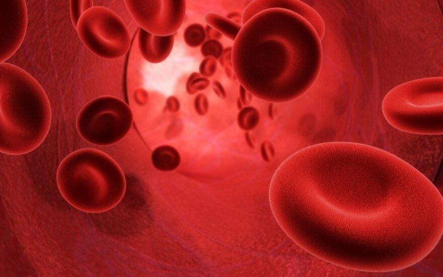 Kraujagyslė
