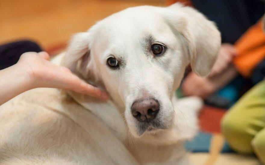Kaimynės siaubas - paryčiais žadinantis šuo